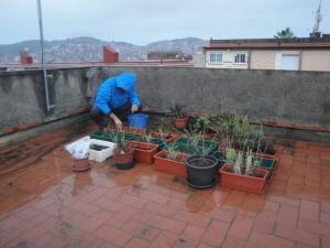 Preparando huerto bajo lluvia :-P