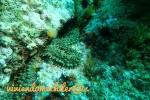 Dive 27 – Bajo  de Piles I, Cabo dePalos